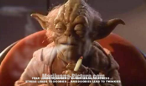 Funny marijuana pictures yoda on weed