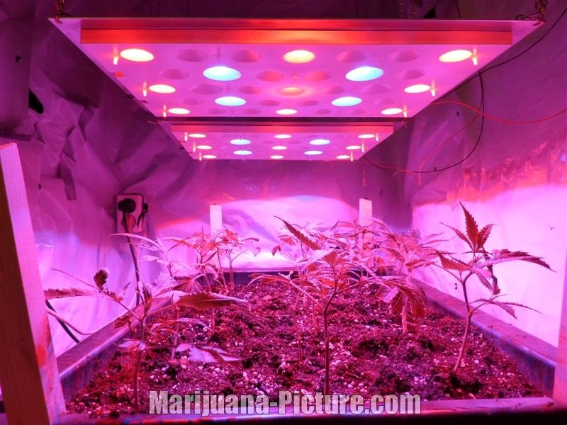 and how to grow weed with hydroponics led grow light hydro blog. Black Bedroom Furniture Sets. Home Design Ideas