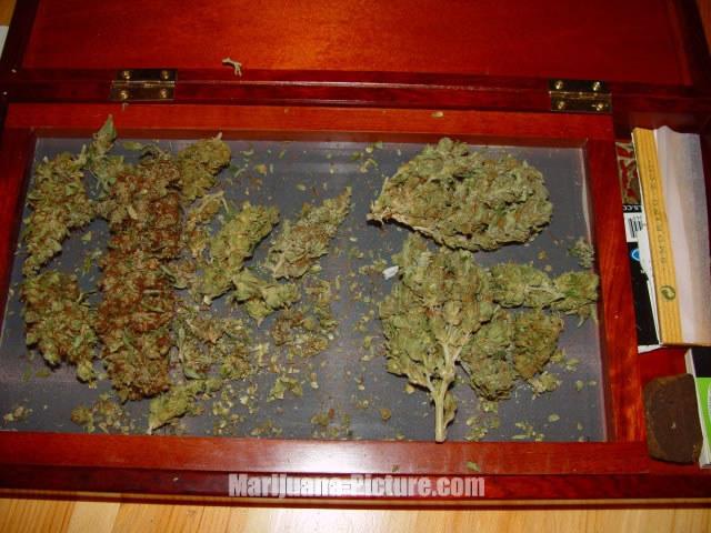 how to tell when marijuana is dry